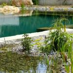 Piscine naturelle La Cadière - Les bassin de filtration et le bassin de baignade